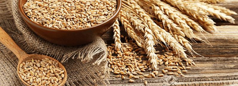 Buğday Alerjisi